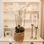 Romantisch erotischer Orchideen-Traum