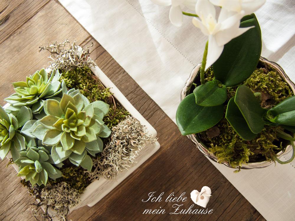 neue frische im januar wie dekoriere ich mit pflanzen. Black Bedroom Furniture Sets. Home Design Ideas